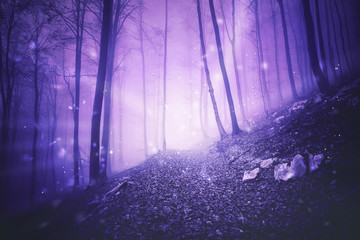 Fantasy pink colored foggy forest landscape with magic firefly lights background.  © robsonphoto