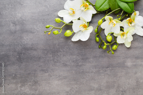 Aluminium Spa Beauty orchid on a gray background. Spa scene.