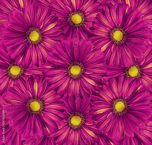 Fotobehang Crimson Floral bright pink background. A bouquet of flowers from pink-yellow gerberas. Close-up. Nature.