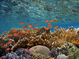 Coral reef with fire coral in tropical sea-underwater - 207871696