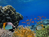 Marine Life in the Red Sea - 207871843