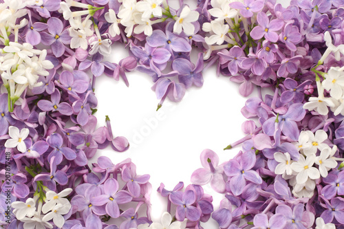 lilac flower background. lilac texture. top view