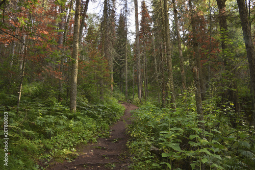 Widok różnych drzew i roślin w gęstym zielonym lesie.