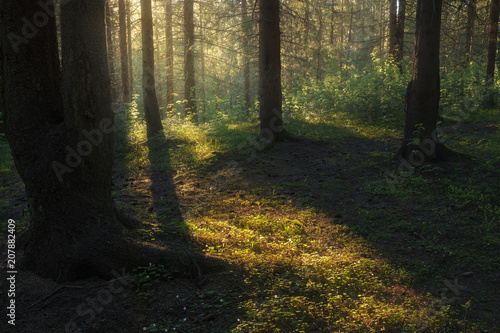Fotobehang Weg in bos sunlight illuminates foliage in a forest