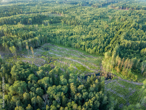Fotobehang Olijf drone image. gravel road surrounded by pine forest from above