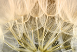 dandelion seed background. Seed macro closeup. Spring nature - 207889670