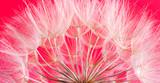 dandelion seed background. Seed macro closeup. Spring nature - 207889688