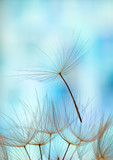 dandelion seed background. Seed macro closeup. Spring nature - 207889874