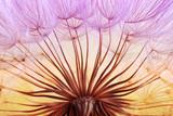 dandelion seed background. Seed macro closeup. Spring nature - 207890465