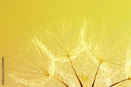 Foto Murales dandelion seed background. Seed macro closeup. Spring nature