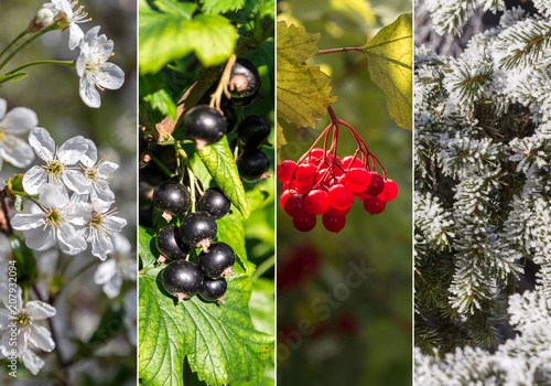 Leinwanddruck Bild Collage of four seasons