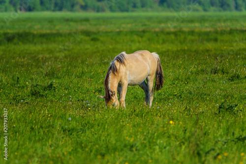 Aluminium Groene the foal is grazing on the field