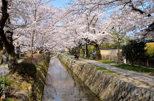 Fotobehang Kyoto 京都 哲学の道