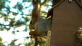 Squirrel - 207950683