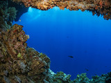 Coral growth on an underwater cave - 207950853