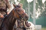 Fototapeta Horses - Koń © marioszek