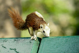 A small squirrel is running on a green chair in a park. - 207960039