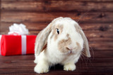 Beautiful rabbit with red gift box on brown wooden table