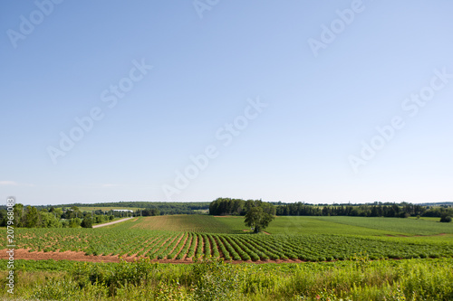 Canvas Blauwe hemel Crops growing in rows in lush soil with clear blue sky and green grasslands