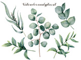 Watercolor eucalyptus big set. Hand painted baby, seeded and silver dollar eucalyptus branch isolated on white background. Floral illustration for design, print, fabric or background. - 207971616