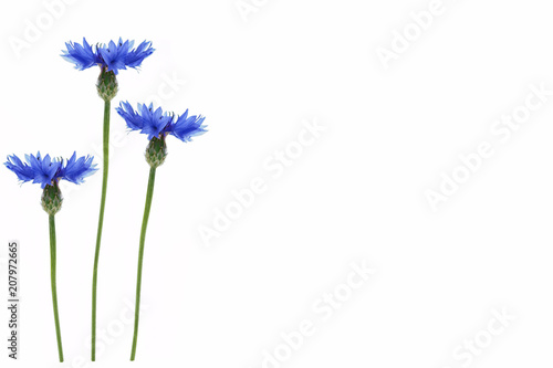 Leinwanddruck Bild Wild flower cornflower