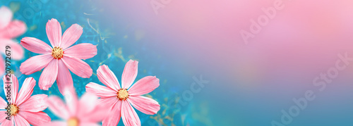 Colorful cosmos flowers on a background of summer landscape. - 207972679