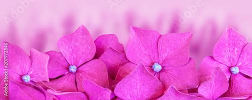 Fotobehang Hydrangea Hortensien