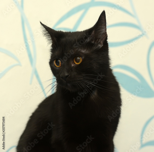 Aluminium Panter Black cat with amber eyes on a blue background