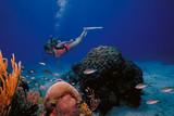 St Croix diver - 207978870