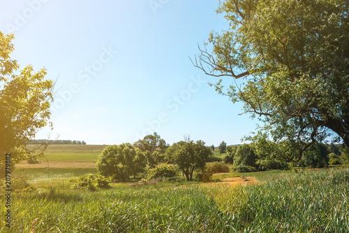 Aluminium Zomer Summer landscape sky, trees, field, bush country scene