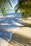 Palm trees cast shadows on the smooth golden sand of a remote tropical Brazilian island beach in Bahia Nordeste Brazil - 207996404