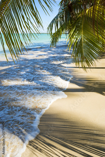 Fototapeten Strand Palm trees cast shadows on the smooth golden sand of a remote tropical Brazilian island beach in Bahia Nordeste Brazil