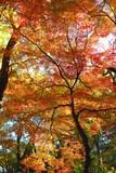 湖畔の公園の紅葉の風景16