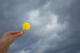 希望のイメージ   曇天 たんぽぽ   - 208021683