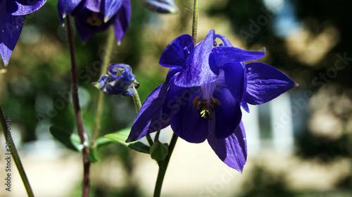 Aluminium Iris beautiful blue flower