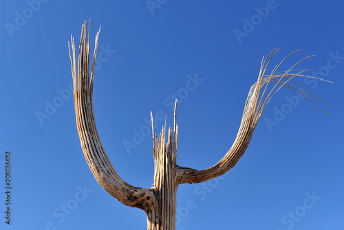 Fotobehang Arizona Dry barrel of cactus