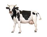 Cow Isolated - 208039673