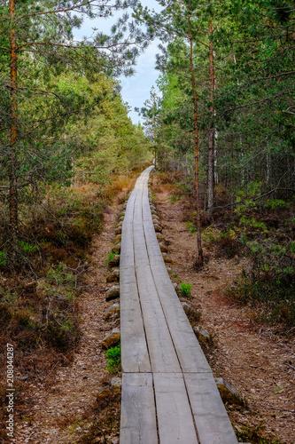 Fotobehang Diepbruine wooden boardwalk in bog swamp area