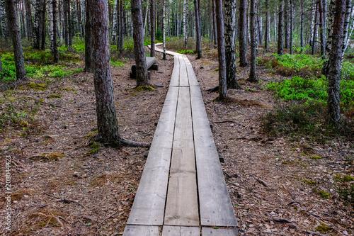 Fotobehang Cappuccino wooden boardwalk in bog swamp area