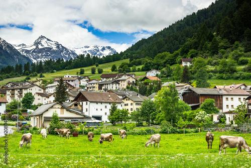 Leinwanddruck Bild Cow pasture and Alps in background of Mustair village,Switzerland