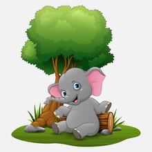 Cute Baby Elephant Sitting Under Tree   Sticker