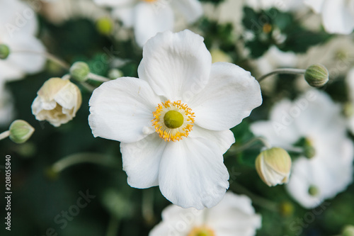 Many beautiful white meadow flowers with green leaves buy photos many beautiful white meadow flowers with green leaves mightylinksfo