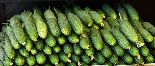 Ripe cucumbers are laid out in a box on a shelf in the grocery store.