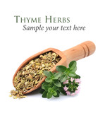 Herbs of thyme. - 208063865