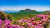 満開のミヤマキリシマと新緑 霧島の山