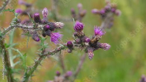Aluminium Lavendel chardon