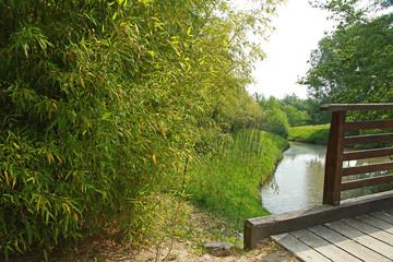 bambouseraie en bord de rivière