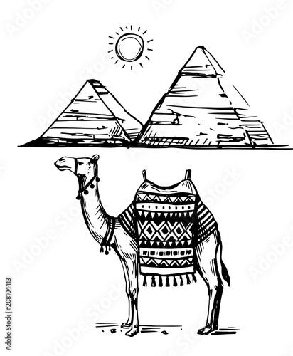 Fototapeta Sketch of camel
