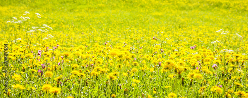 Frühlingswiese - 208117484