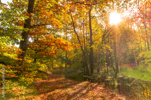 Aluminium Herfst Forest in autumn, landscape with sunset. Sun shining through trees.